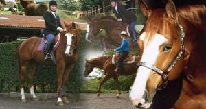1-cavalli-badi-farm